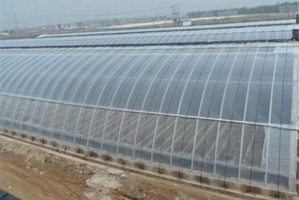 青海日光溫室大棚承接-結實耐用的日光溫室大棚哪里有