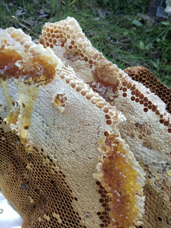 【车氏蜜蜂园】烟台蜂蜜 烟台野生蜂蜜 烟台原生态蜂蜜