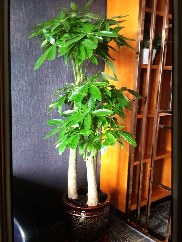 哈尔滨花卉租赁|哈尔滨绿植