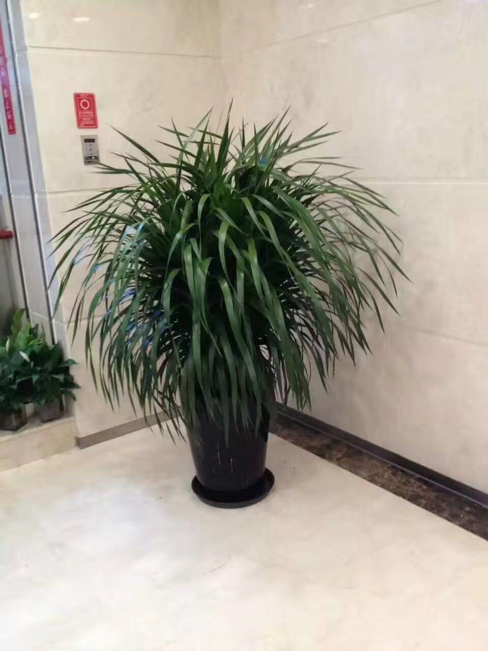 哈尔滨花卉租摆|哈尔滨花卉租赁