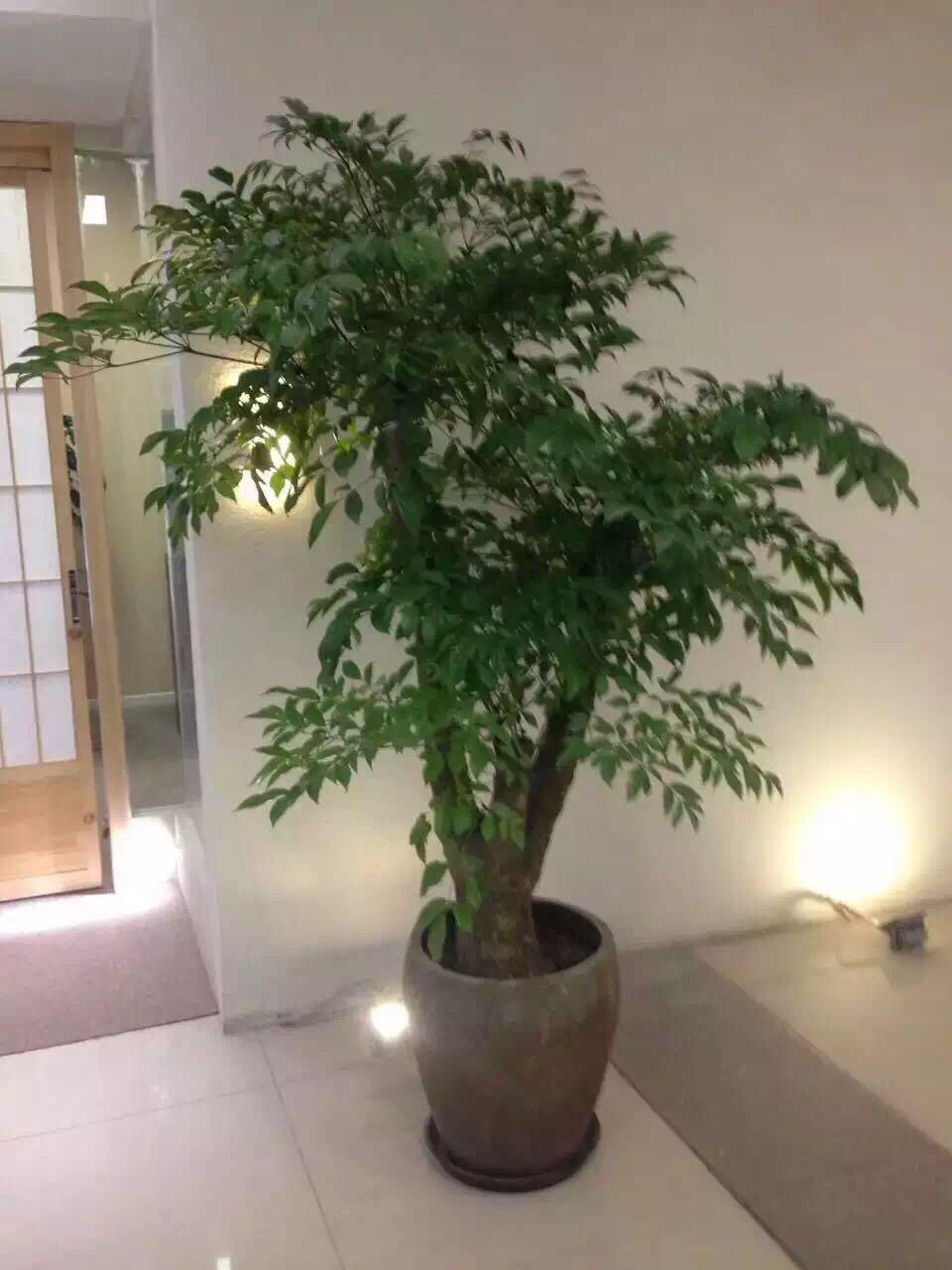 哈尔滨花卉租赁|哈尔滨绿植-来找哈尔滨优悦花卉