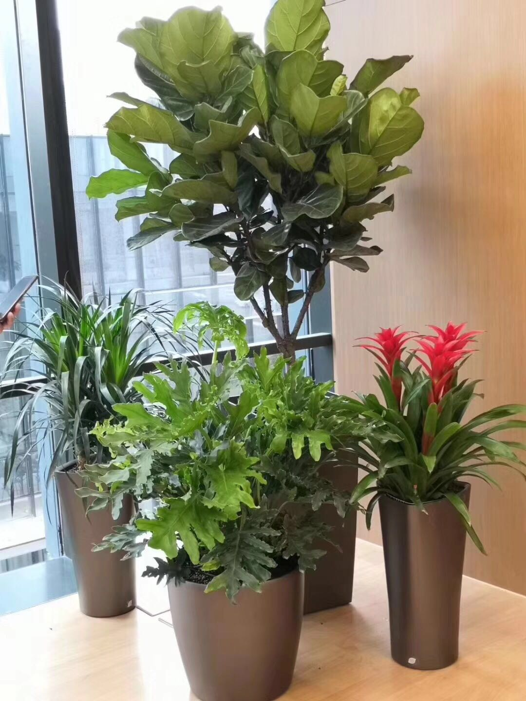 哈尔滨绿植|哈尔滨花卉