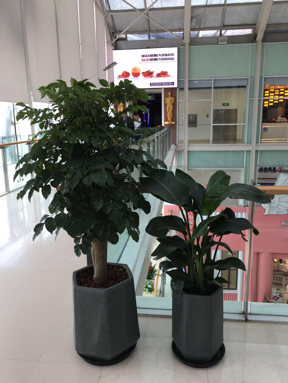 哈尔滨优悦花卉_可靠资深的哈尔滨绿植租摆公司-双鸭山园林绿化公司