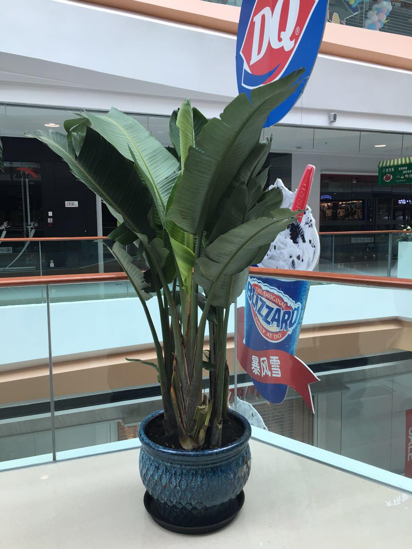 供應哈爾濱不錯的哈爾濱綠植-鶴崗哈爾濱花卉出租公司