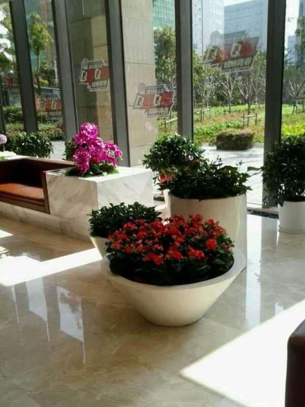 哈尔滨植物墙哪家好,花卉租赁厂家