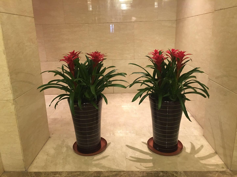 哈尔滨植物墙哪里买比较好 七台河花卉租摆公司
