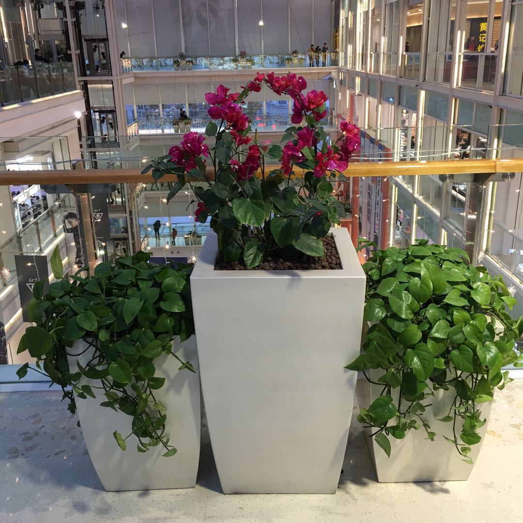 哈尔滨花卉|哈尔滨绿植租摆-哈尔滨优悦花卉专业供应