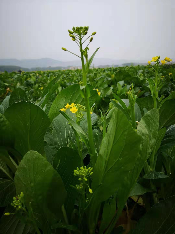 農產品配送|廣東可靠的公司|農產品配送
