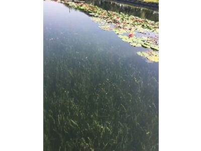 本地的污水处理-蔷薇英联供应口碑好的污水处理