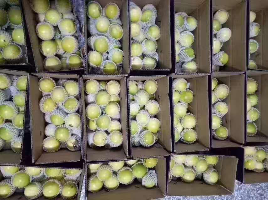 江干特色百果香 采購實惠的百香果就找湖南陳海龍生態農業