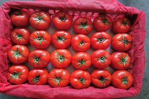 果蔬配送-福建哪家果蔬配送公司可靠