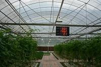 全自动温室(温、光、汽)控制大棚
