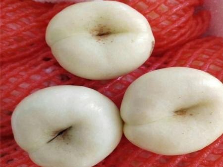 白油蟠桃36-3树苗-潍坊白油蟠桃基地直销