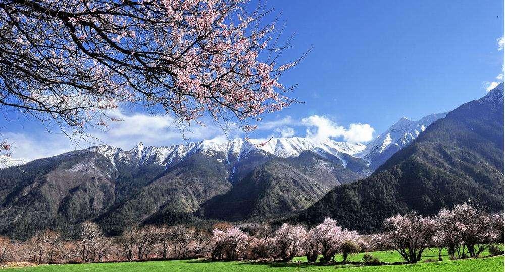 湖北西藏高考落户-河北地区具有口碑的西藏高考落户服务
