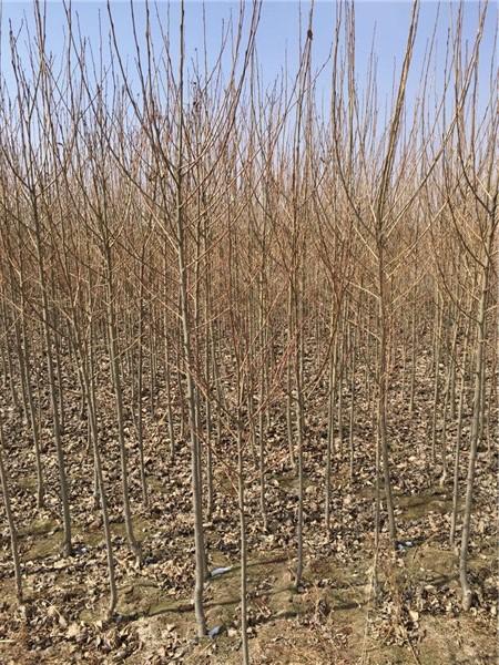 苗木種子——青海苗木種子批發銷售價格