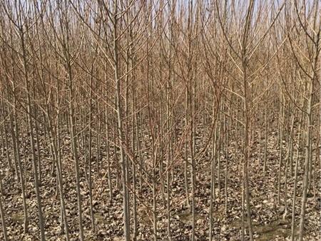 苗木种子——青海苗木种子批发销售价格