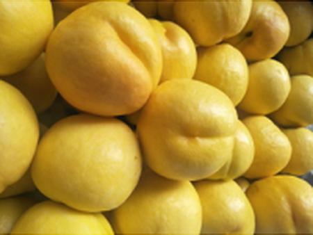 黄珊瑚黄金油桃树苗_友建苗木_优良黄珊瑚黄金油桃供应商