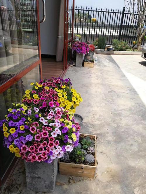 河南野花組合種子哪家好-哪里能買到野花組合種子