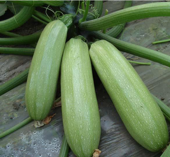 广州专业蔬菜配送-有保障的蔬菜配送服务米久餐饮提供