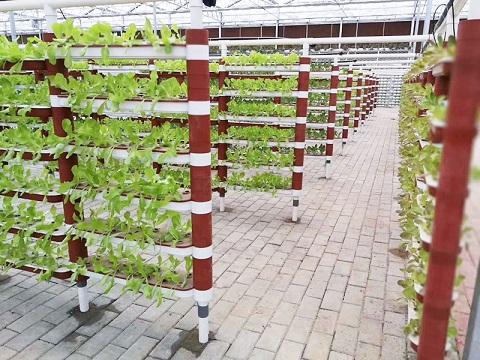 蔬菜温室大棚建设,蔬菜温室大棚建造,蔬菜温室大棚