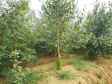 沈陽園林綠化|品牌好的園林綠化推薦