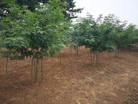 沈阳园林绿化公司|辽宁信誉好的园林绿化公司