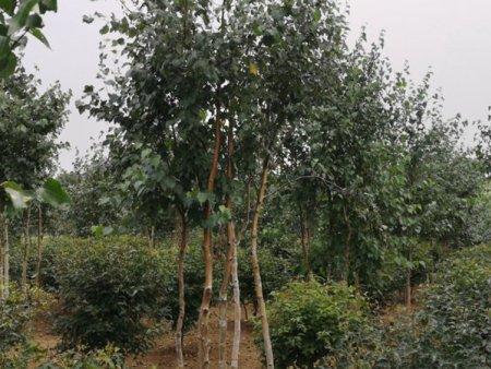 遼寧園林綠化施工|知名的園林綠化推薦