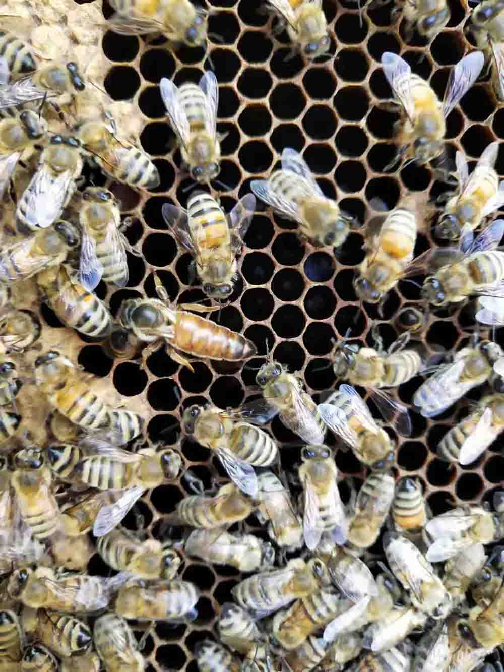 煙臺蜂蜜 煙臺蜂蜜價格 煙臺蜂蜜哪家好-昆之陽蜂蜜
