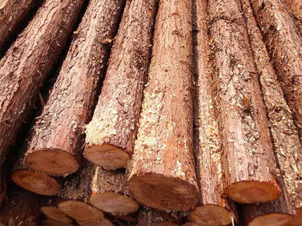 物超所值的松木樁森旺供應