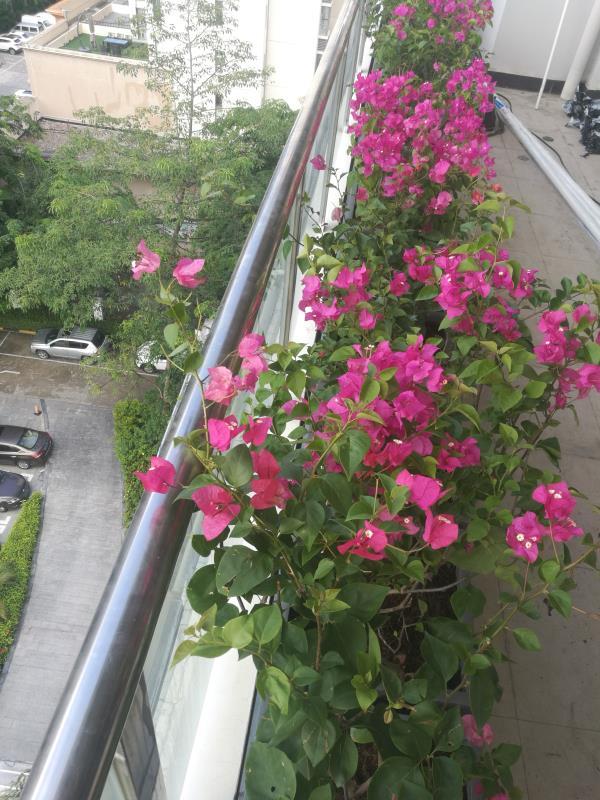 植物墙绿化公司【室内外植物墙垂直绿化】