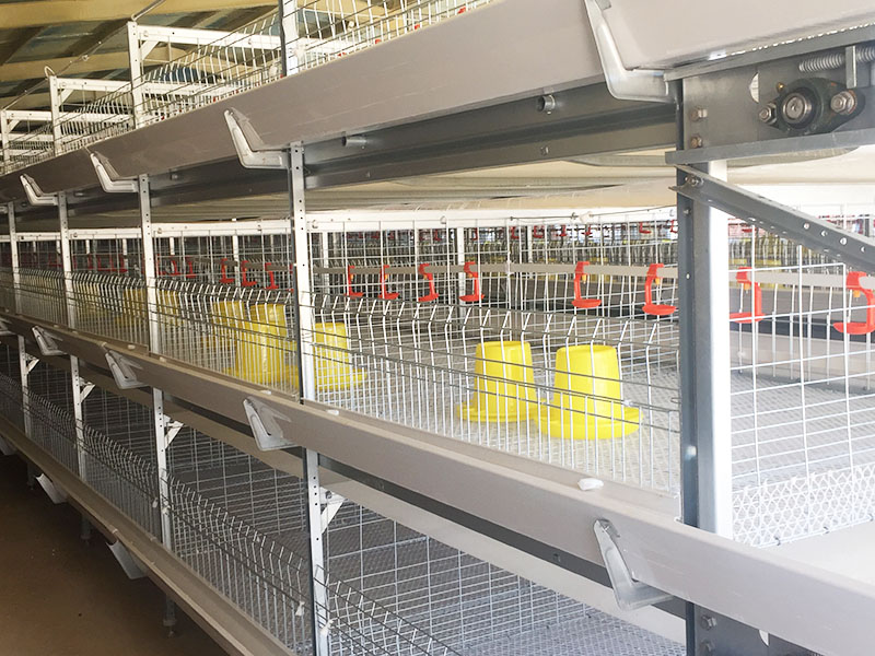 肉鸭笼养设备