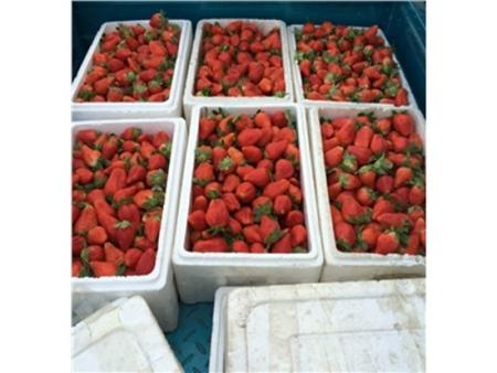 爱莎草莓苗就选芸丰,高品质低价格!