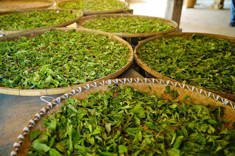 郑州茶叶生产厂家
