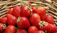 介绍湖南红颜草莓苗!