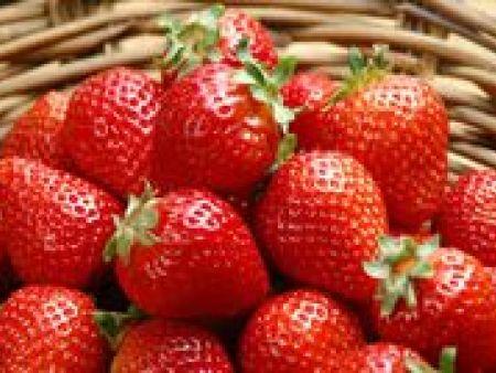 山东甘露草莓苗基地和您说一说新型冠状病毒肺炎该如何防范!