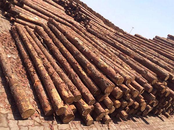 平頭松木樁哪里有|湖南森旺松木樁訂做