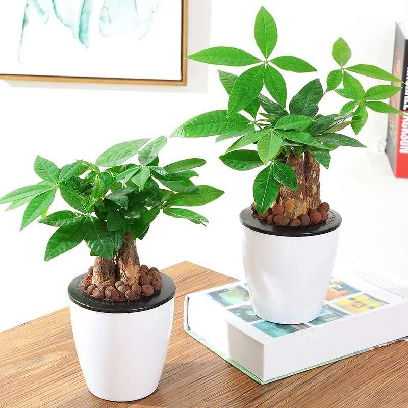 青島專業的綠植盆栽在哪里 即墨綠植盆栽