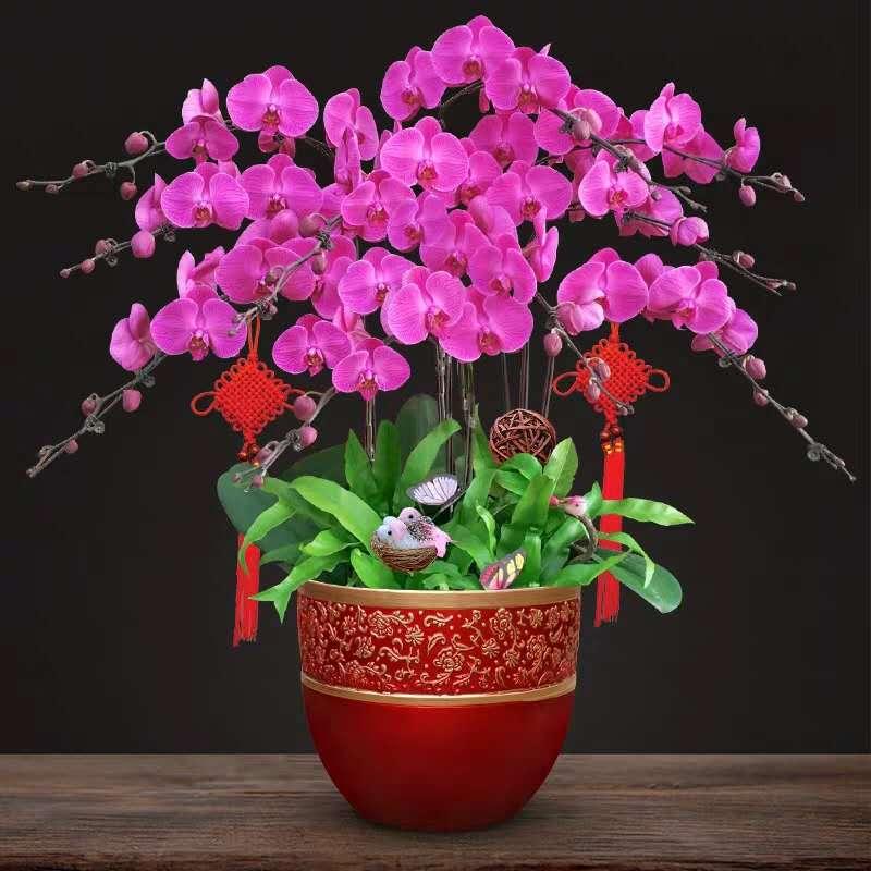 即墨花卉種類-專業的花卉租賃親情推薦