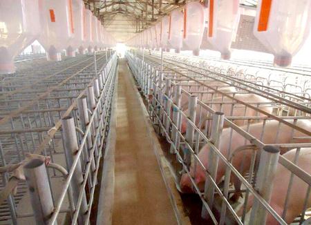 黃山母豬產床廠家-專業的母豬產床供貨商