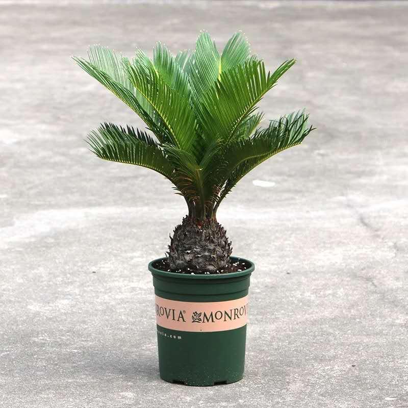 卓進源花卉_專業的綠植盆栽公司-平度綠植有哪些好處