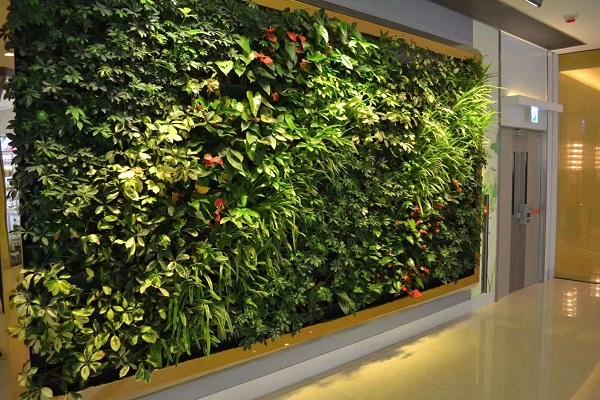 福建垂直綠化_提供可靠的垂直綠化