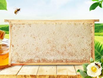 威海蜂巢蜜批發_去哪找聲譽好的蜂巢蜜批發商
