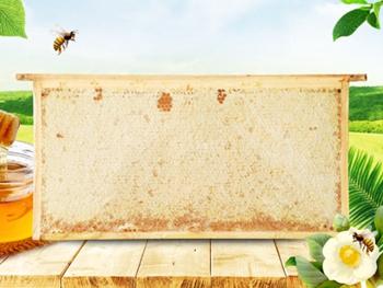 威海蜂巢蜜多少錢|供應濰坊新品蜂巢蜜