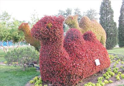 植物绿雕公司-哪里可以买到划算的植物绿雕