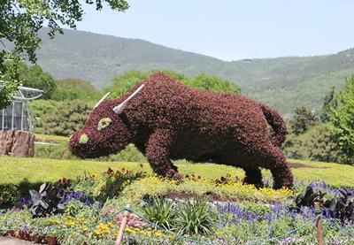 植物绿雕公司-江苏优惠的植物绿雕供应