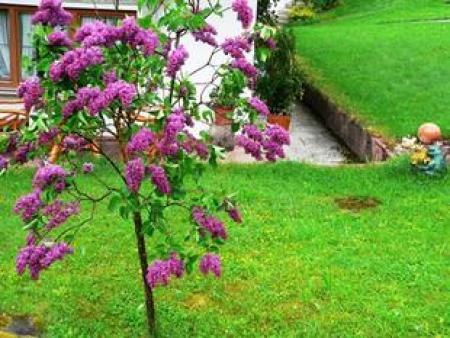 花卉苗木运费有多贵?运费应该怎么节省?