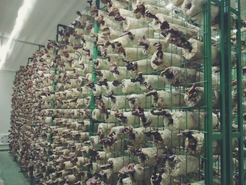 代理食药菌网架-实惠的食药菌网架厂家衡水市哪有供应