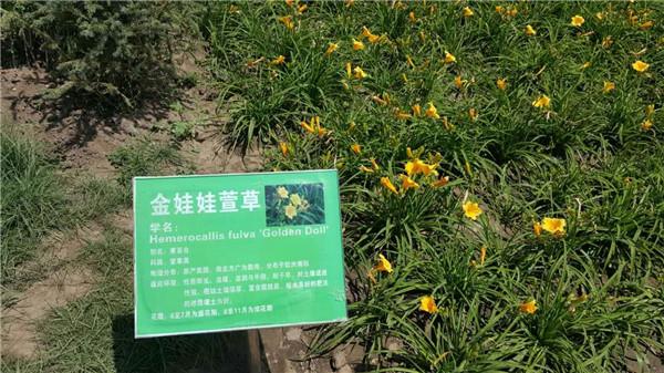 甘肃花卉种子_花卉种子时时更新批发价格