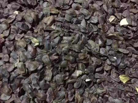 清原滿族自治縣源山中藥材提供具有口碑的白薇苗-白薇種子批發
