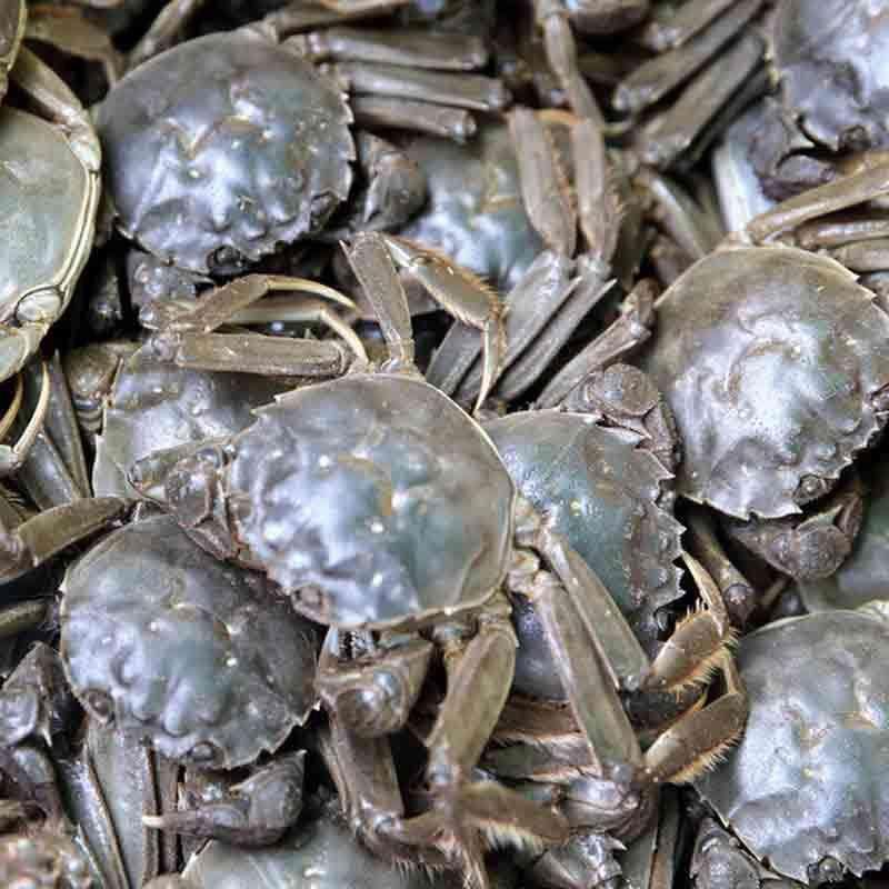 河蟹市场价格|盘锦实惠的河蟹哪里有供应